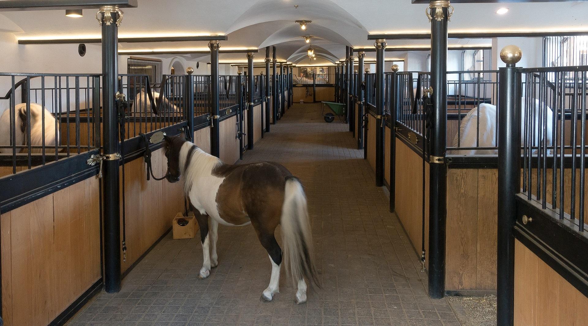 Pferdeboxen - Metallkonstruktionen Munding